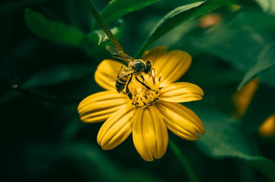 Insect, Nature, Bee, Honey, Summer, Pollination