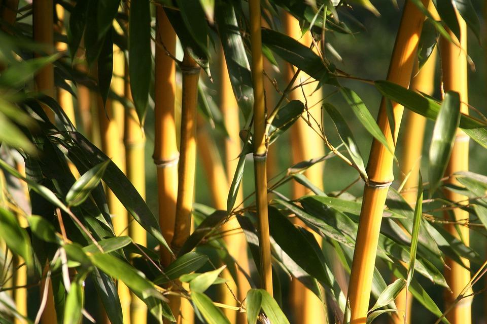Blatt Bambus Pflanze Kostenloses Foto Auf Pixabay