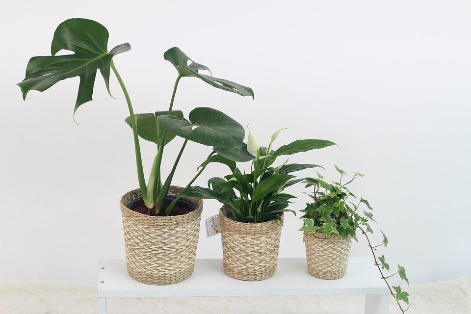 Attractive Plants Pots
