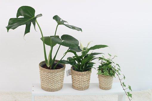 開店祝にに喜ばれる観葉植物