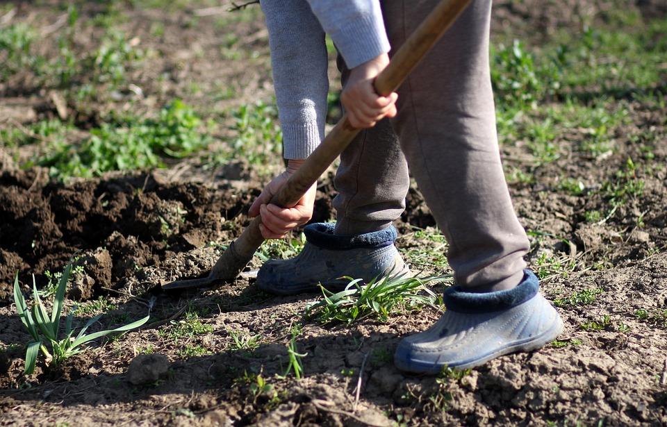 Graven, Spade, Landelijk, Werknemer, Tuin
