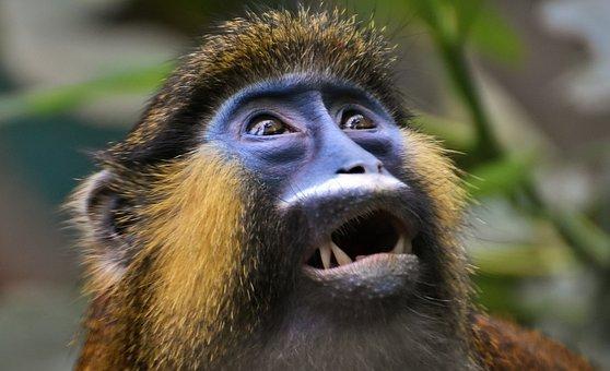 Más De 4000 Imágenes Gratis De Mono Y Animales Pixabay