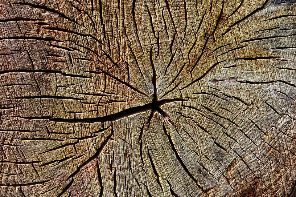 Wood, Chopped, Cut, Year Rings, Pattern, Texture