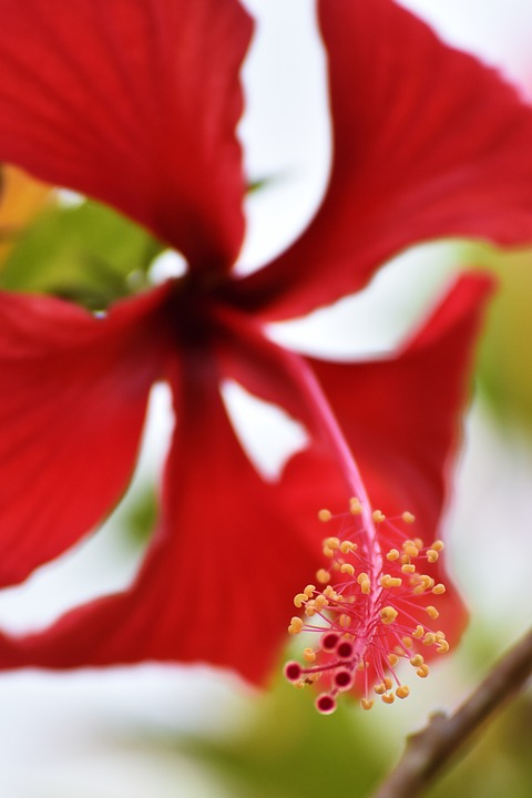Flor, Naturaleza, Planta, Hoja, Verano, Hibiscus