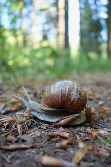 Nature, Slowly, Snail, Slimy