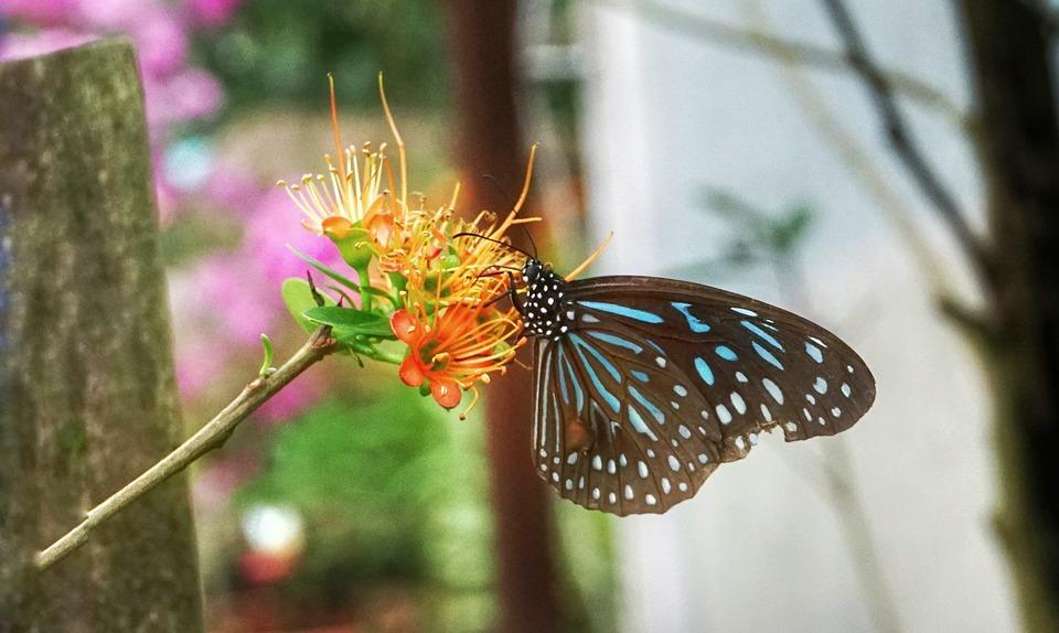 Schmetterling Futterung Pflanze Kostenloses Foto Auf Pixabay