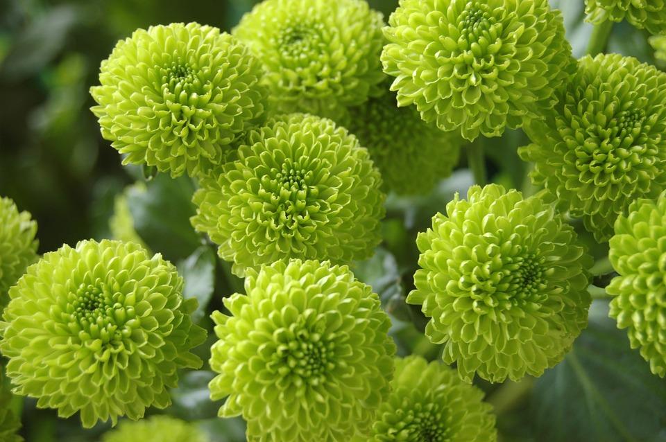 Foto Gratis Flores Fondo Naturaleza: Naturaleza Flor Fondo De Pantalla · Foto Gratis En Pixabay