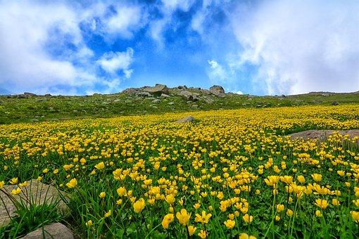 Nature, Area, Landscape, Flower, Chan