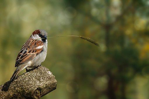 Natur, Tierwelt, Vogel, Sperling