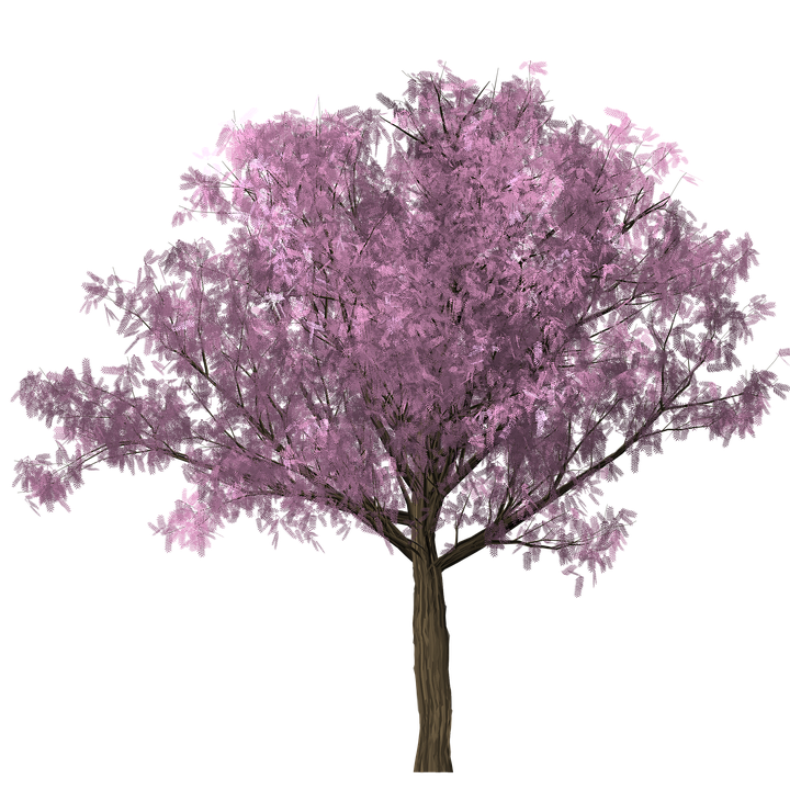 tree design graphics clipping scrap photoshop