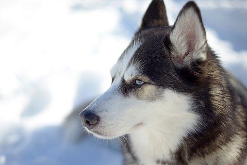 Dog, Cute, Animal, Canine, Mammal, Snow