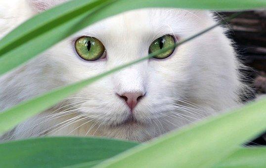 Porträt, Natur, Tier, Katze, Schöne