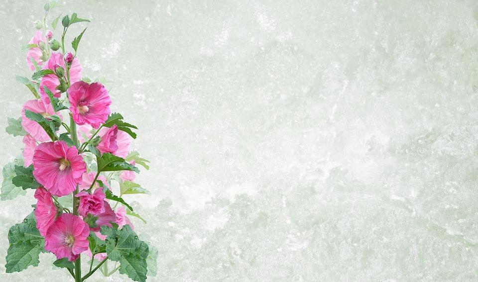 Greeting card flower flora free photo on pixabay greeting card flower flora nature leaf summer m4hsunfo