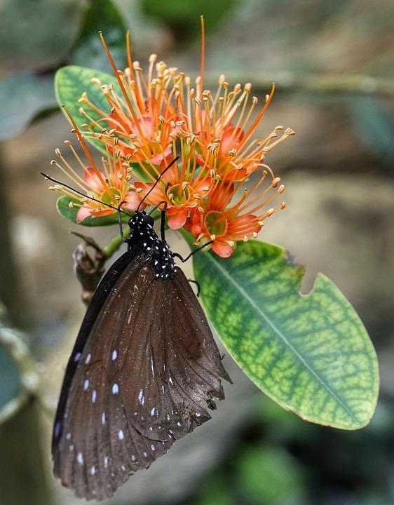 Schmetterling Futterung Blume Kostenloses Foto Auf Pixabay