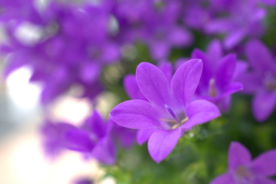 Spring flower garden free photo on pixabay spring flower garden nature plant summer petal mightylinksfo Image collections