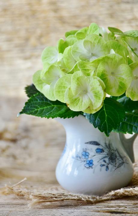 Hydrangeas flowers yellow free photo on pixabay hydrangeas flowers yellow green flower garden mightylinksfo