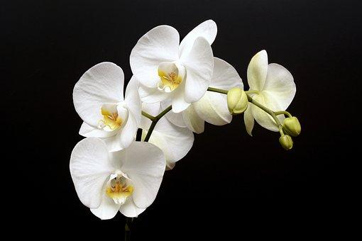 orchidee finance