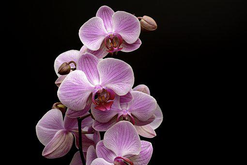 orchidee finance