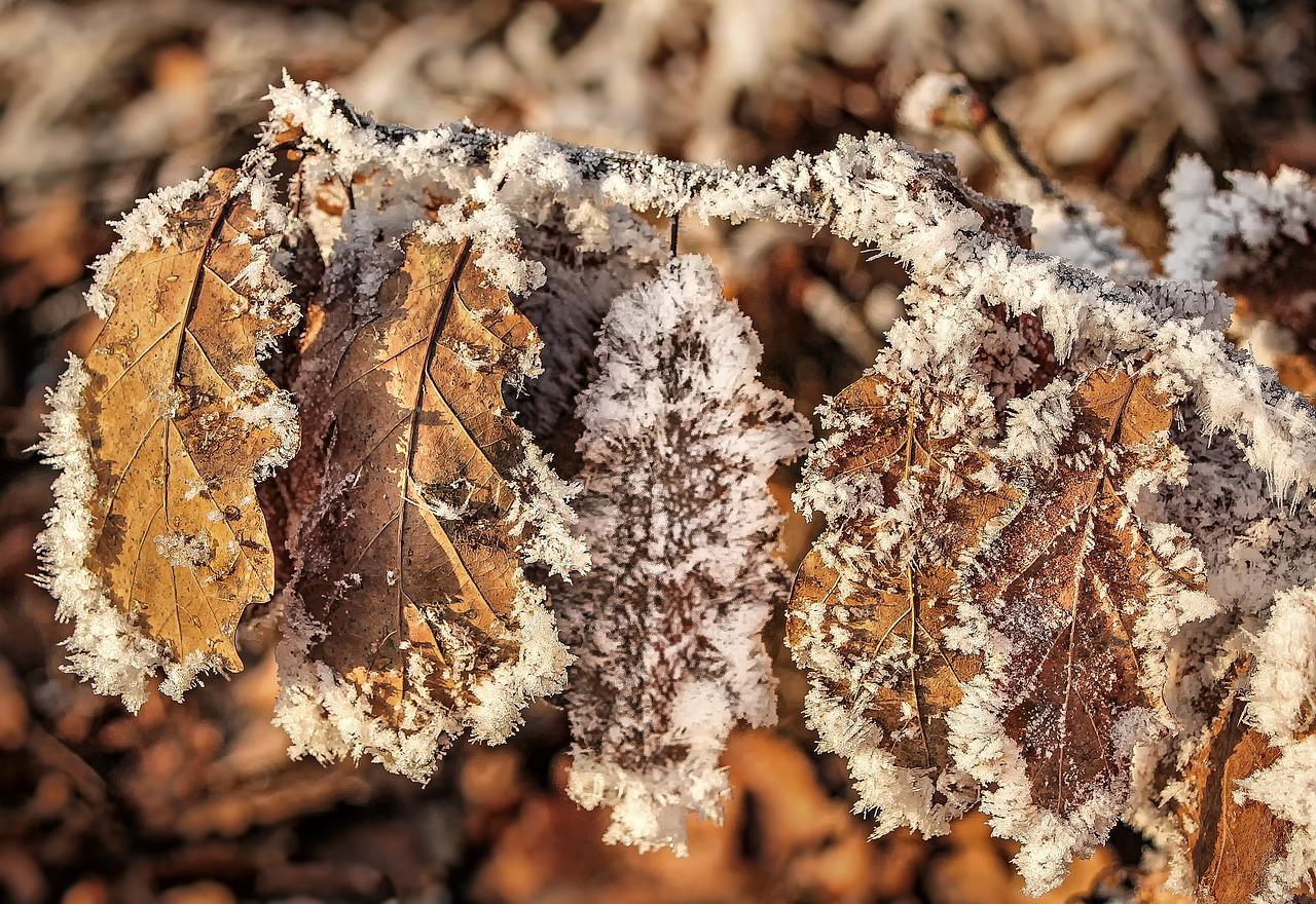 просматривая книгу картинки листьев зимой позволяет также производить