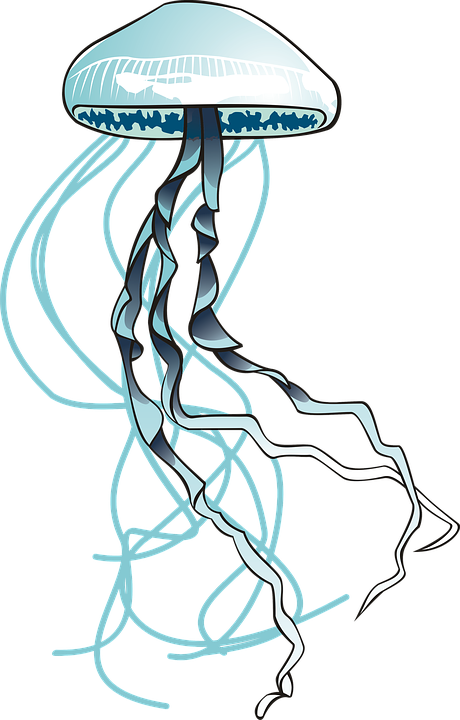 Denizanası Deniz Ocean Pixabayde ücretsiz Resim