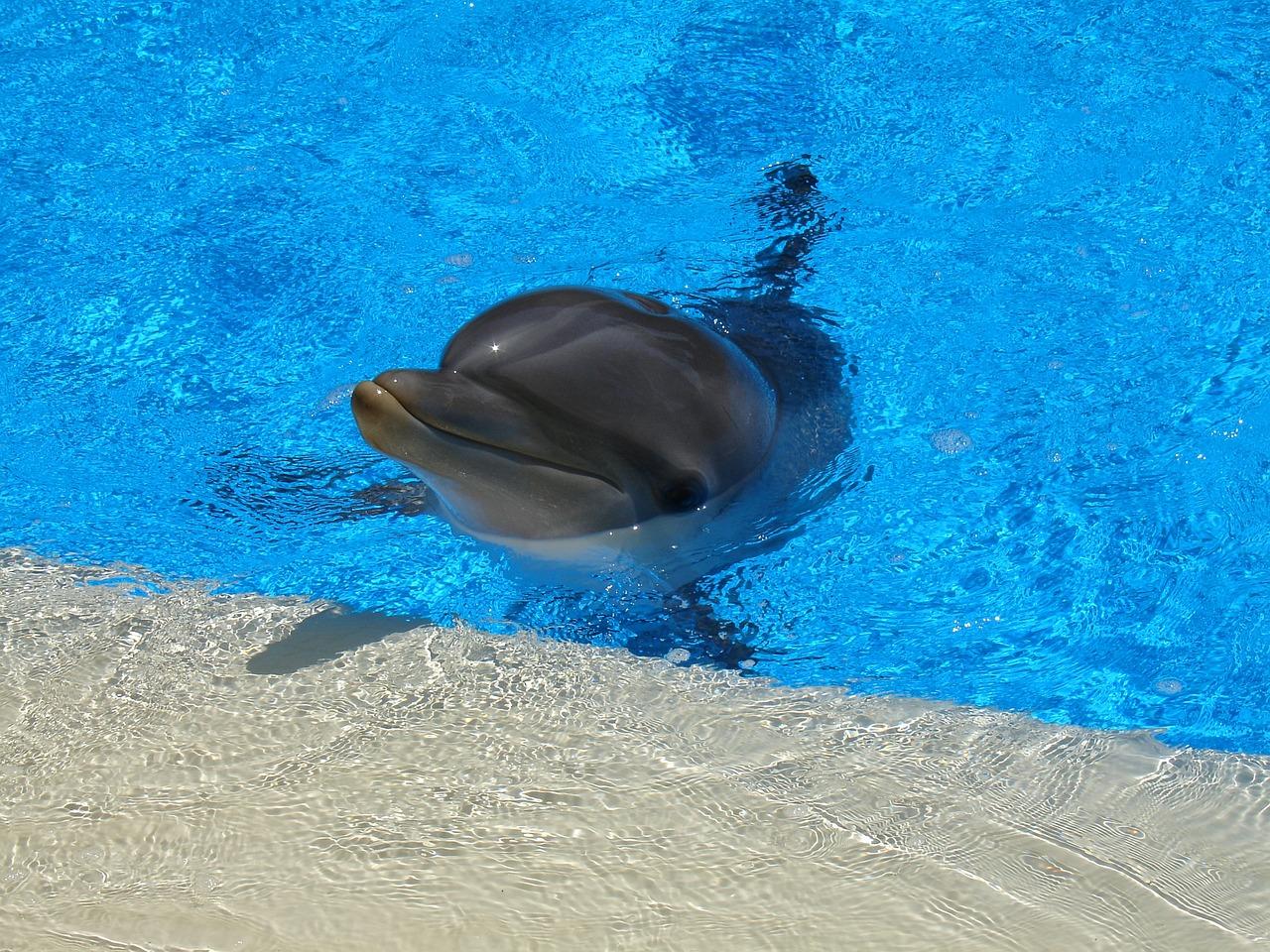 монитора фото дельфин мерцающий этих городах вполне