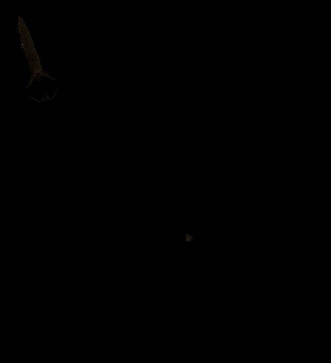 ORKA SILHOUETTE СКАЧАТЬ БЕСПЛАТНО