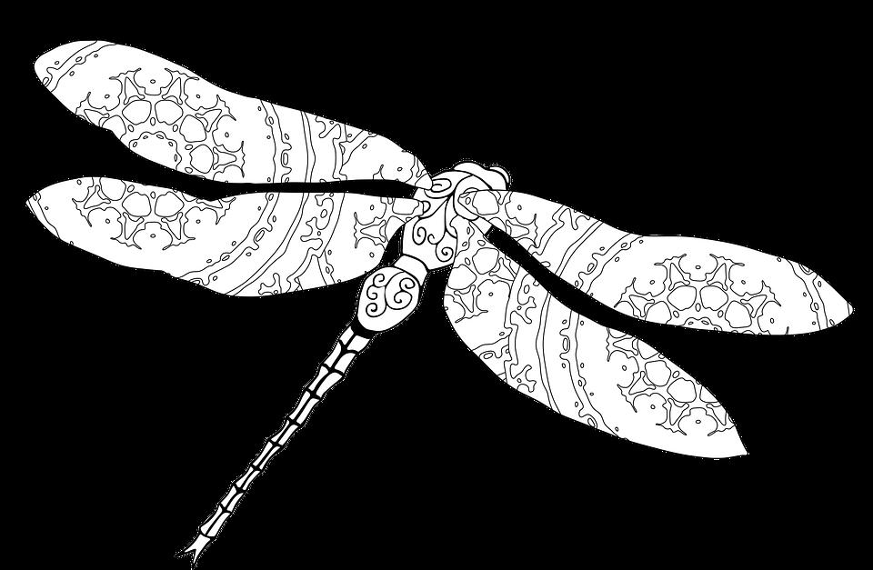 Yusufçuk Boyama Doğa Pixabayda ücretsiz Vektör Grafik