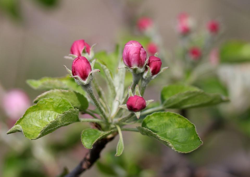 Blumen Rosa März Kostenloses Foto Auf Pixabay