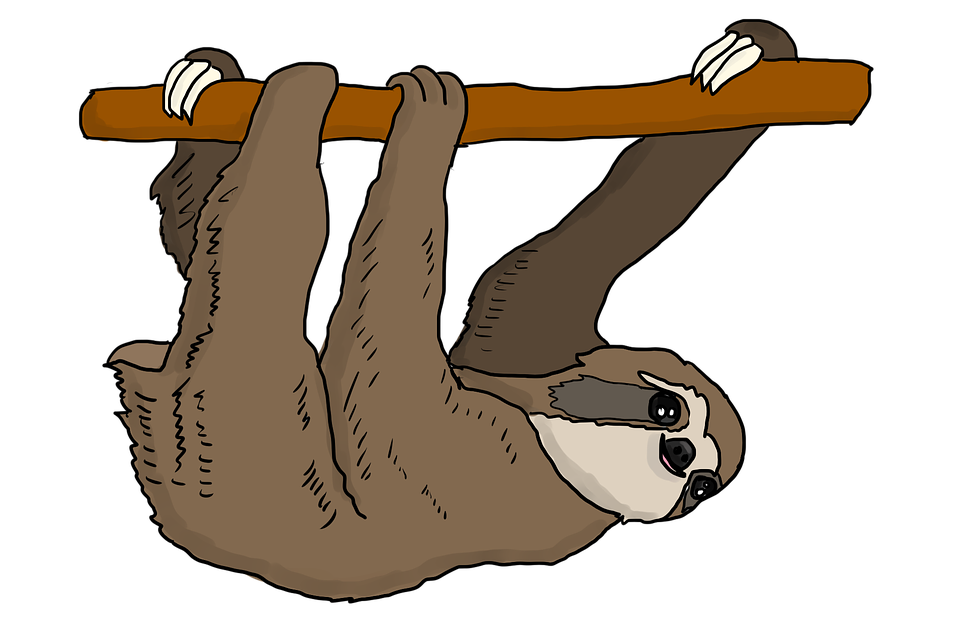 how to draw a sloth hanging from a tree