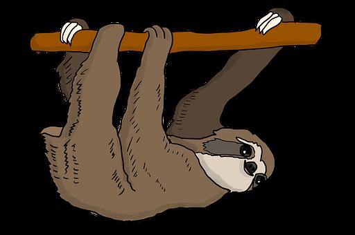 Sloth, Tree Sloth, Hanging, Cute, Mammal