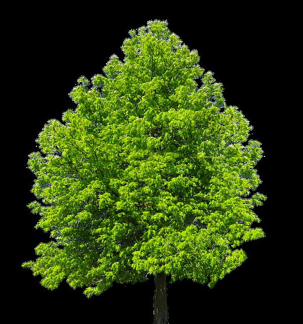 Nature Tree  Isolated Free photo on Pixabay