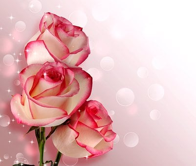 Birthday bouquet images pixabay download free pictures flower rose petal romance love mightylinksfo Images