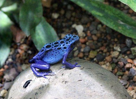 La Naturaleza, Mundo Animal, Anfibio
