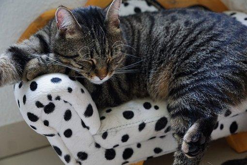 Pet, Animal, Cute, Cat, Domestic, Mammal