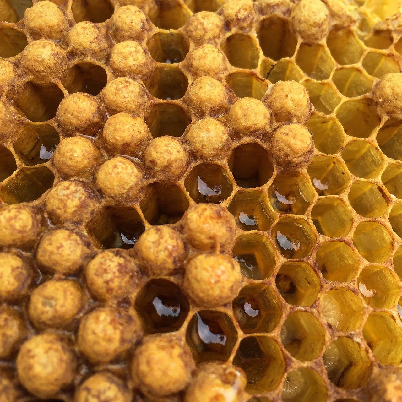 детям о пчелиных сотах в картинках если