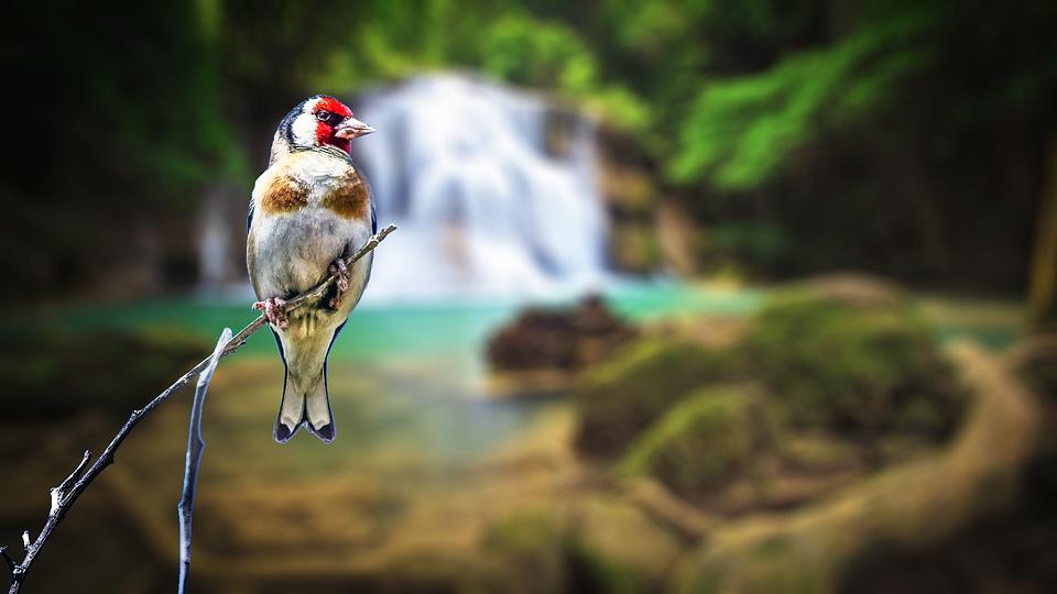 Bird Background Nature - Free photo on Pixabay