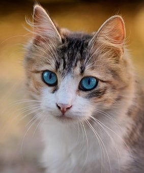 30 000 Cat Pictures Images Hd Pixabay