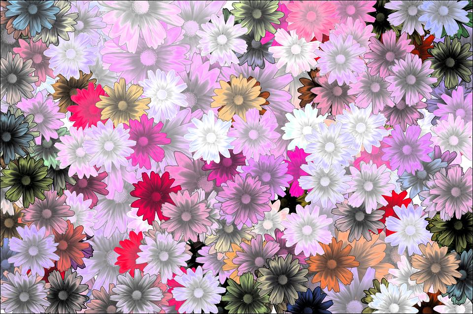 Carta Da Parati Rosa Bianca : Flower flowers carta da parati free image on pixabay