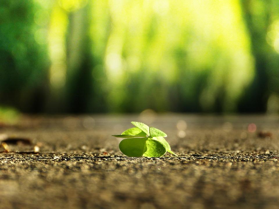 4 つ葉のクローバー, 道路, 緑, 緑色のライト, 運, 見つけます, 楽観主義, 肯定的です, 希望