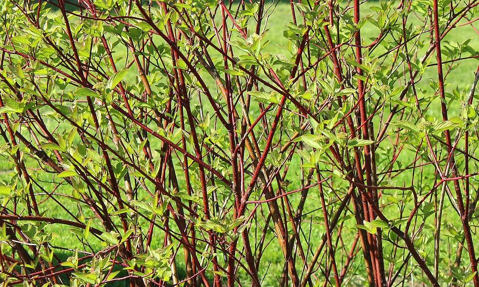 Arbusto Primavera Hojas De Color · Foto gratis en Pixabay
