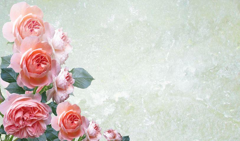 Цветы картинка на открытку