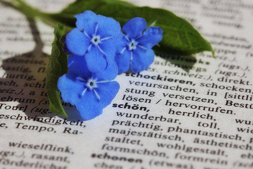 本, 紙, 塞ぎます, 花, 私を忘れる, 青, 本静, マクロ, フォント