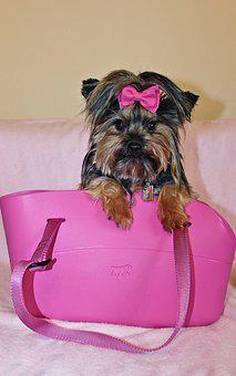 Yorkshire Terrier, Dog, Beauty, Pink