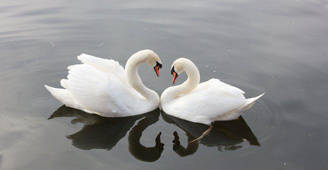 Naturaleza, Amor, Agua, Río, Animales