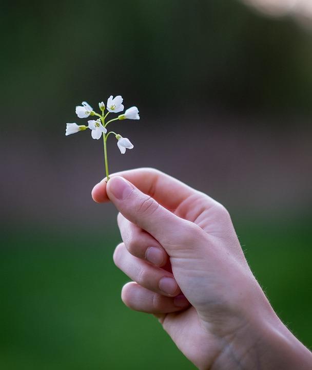 Nature Fleur Main Photo Gratuite Sur Pixabay