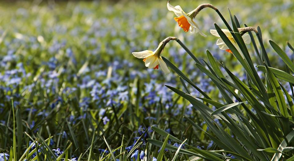 Bunga Padang Rumput Bakung Foto Gratis Di Pixabay