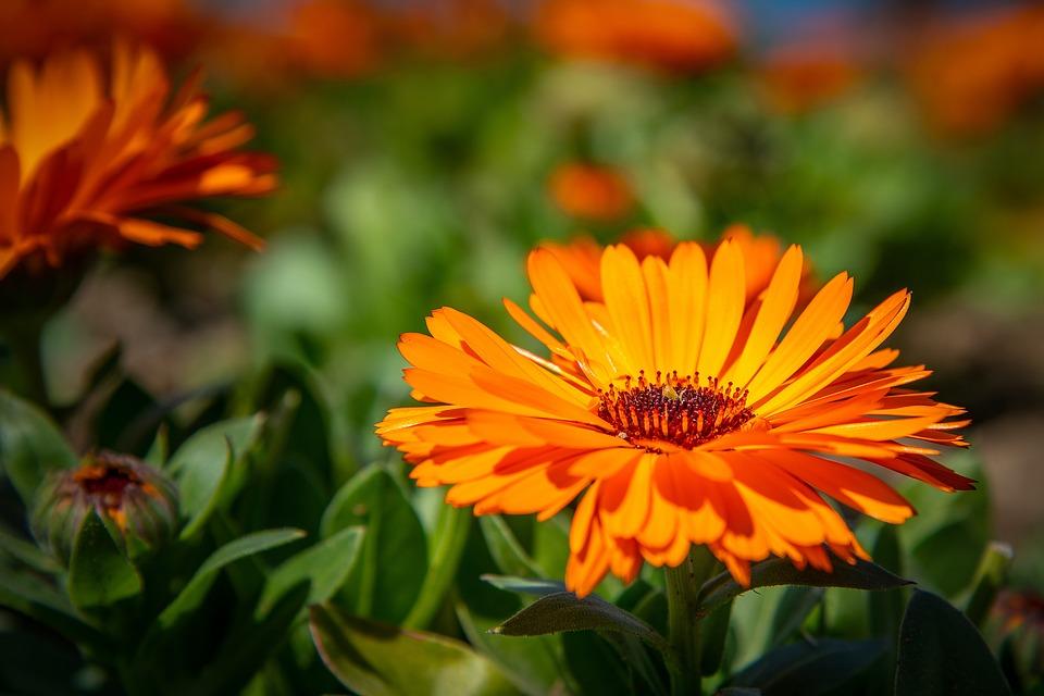 Flower Plant Nature · Free photo on Pixabay