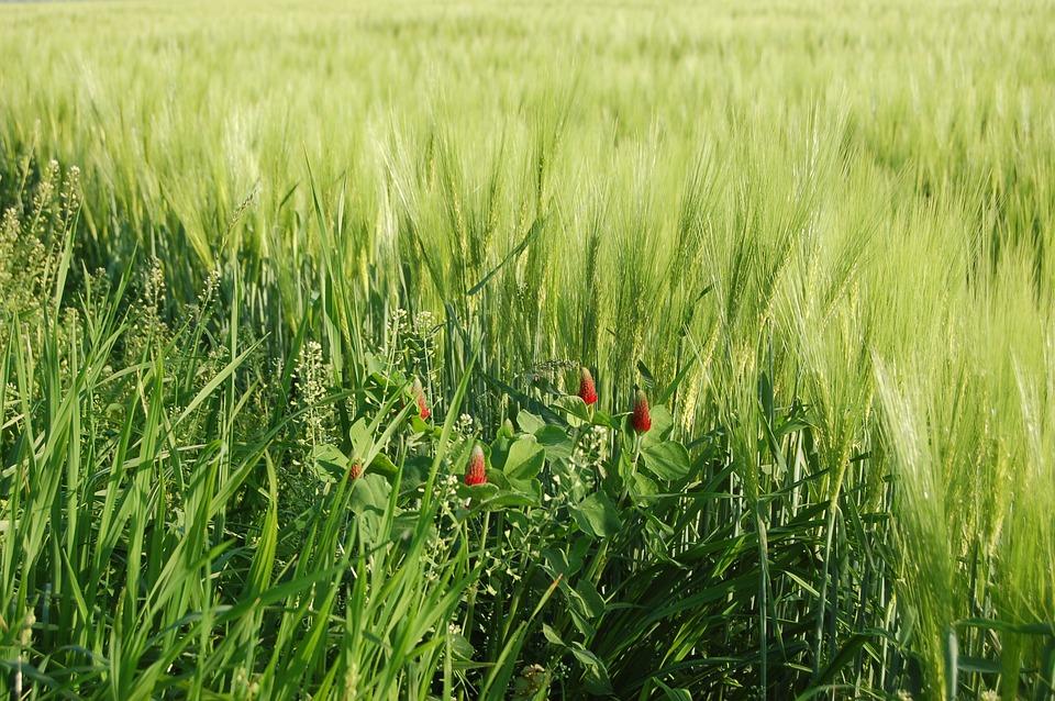 Bidang Pertanian Sereal Foto Gratis Di Pixabay