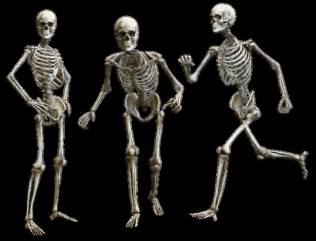 Skelett Menschliche Knochen · Kostenloses Bild auf Pixabay