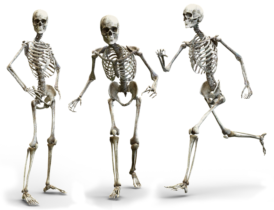 Skeleton Human Bone Free Image On Pixabay